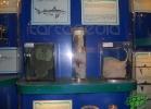 tartapedia-acquario-napoli-0035