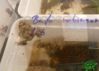 tartapedia-rettili-in-campania-2012-0035