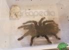 tartapedia-rettili-in-campania-2012-0038