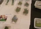 tartapedia-rettili-in-campania-2012-0047