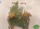 tartapedia-rettili-in-campania-2012-0048