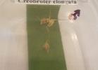 tartapedia-rettili-in-campania-2012-0051