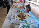 tartapedia-rettili-in-campania-2012-0055