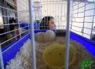 tartapedia-rettili-in-campania-2012-0057