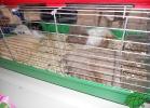tartapedia-rettili-in-campania-2012-0058