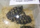 tartapedia-tarta-expo-2011-00004
