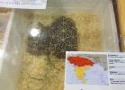 tartapedia-tarta-expo-2011-00010