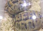 tartapedia-tarta-expo-2011-00014