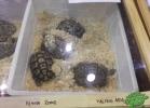 tartapedia-tarta-expo-2011-00015