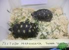 tartapedia-tarta-expo-2011-00017