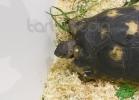 tartapedia-tarta-expo-2011-00018