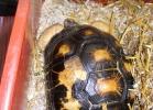 tartapedia-tarta-expo-2011-00019