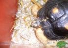 tartapedia-tarta-expo-2011-00020