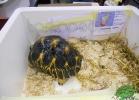 tartapedia-tarta-expo-2011-00021