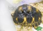 tartapedia-tarta-expo-2011-00022