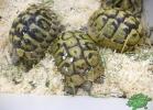 tartapedia-tarta-expo-2011-00023