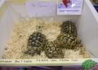 tartapedia-tarta-expo-2011-00024
