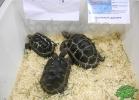 tartapedia-tarta-expo-2011-00026