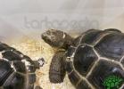 tartapedia-tarta-expo-2011-00027