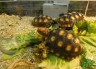 tartapedia-tarta-expo-2011-00063