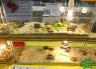 tartapedia-tarta-expo-2011-00065