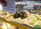 tartapedia-tarta-expo-2011-00066