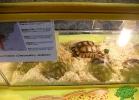 tartapedia-tarta-expo-2011-00067