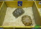 tartapedia-tarta-expo-2011-00074