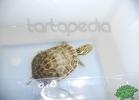 tartapedia-tarta-expo-2011-00079