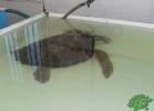 tartapedia-turtle-point-napoli-00002