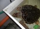 tartapedia-turtle-point-napoli-00003