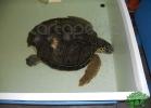 tartapedia-turtle-point-napoli-00005