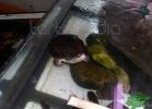 tartapedia-turtle-point-napoli-00011
