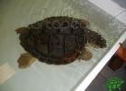 tartapedia-turtle-point-napoli-00013