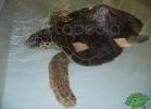 tartapedia-turtle-point-napoli-00014