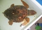 tartapedia-turtle-point-napoli-00017