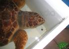 tartapedia-turtle-point-napoli-00018