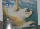 tartapedia-turtle-point-napoli-00020