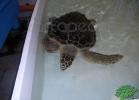 tartapedia-turtle-point-napoli-00024