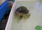 tartapedia-turtle-point-napoli-00025
