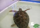 tartapedia-turtle-point-napoli-00026
