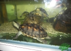 tartapedia-turtle-point-napoli-00036
