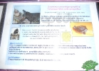 tartapedia-turtle-point-napoli-00037