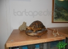 tartapedia-turtle-point-napoli-00048