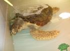 tartapedia-turtle-point-napoli-2011-031