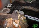 tartapedia-turtle-point-napoli-2011-038