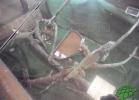 tartapedia-turtle-point-napoli-2011-039