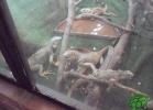 tartapedia-turtle-point-napoli-2011-040