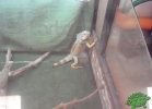 tartapedia-turtle-point-napoli-2011-041