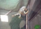 tartapedia-turtle-point-napoli-2011-042
